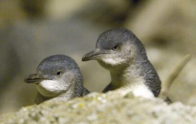 Alpine Motel-penguins